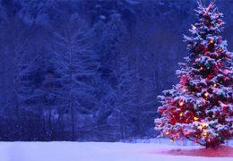 """Immagine Alberi di Natale all'asta per """"Action Innocence"""""""