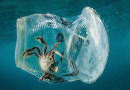 Immagine La salute degli oceani è supervisionata dalla Commissione di Monaco